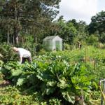 Gemeinschaftsgärten CoHousing Lebensraum